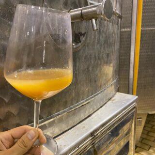 Grillo DOP Sicilia 2020 biologico 💥 . . Ha inizio il nostro nuovo progetto di vinificazione naturale: ▪️Raccolta manuale in cassette ▪️Decantazione ▪️Fermentazione spontanea con lieviti Indigeni ▪️Bassissimi contenuti di anidride solforosa . . Non vediamo l'ora di mettere in bottiglia i nuovi vini del progetto 💥Naturalmente del Marchese 💥🚀🍷 . . 🍷Vini 🌊 mari 🌋 vulcani _______________________________ www.marchesedellesaline.com . . #grillo #sicily #terroirs #organic #natural #wines #italy #wine #vino #winelover #withewine #winery #winelovers #instawine #unitedstates #whitewine #winestagram #vineyard #usa #wines #etna #winelife #california #newyork #winemaker #biologico #vinoitaliano #vinorosso #italianwines #docsicilia