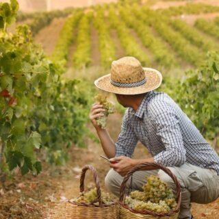 Sicuramente sarà una vendemmia destinata a rimanere nella storia quella del 2020. . Ci aspettano tante novità per il nuovo anno, la nostra linea sarà arricchita da altri nuovi vini prodotti sempre dai vitigni autoctoni del territorio marsalese. ❤️🥳 . Curiosi di scoprirli? Continuate a seguirci, presto tutti gli aggiornamenti ☺️🍇 . . 🍷Vini 🌊 mari 🌋 vulcani _______________________________ www.marchesedellesaline.com . #harvest #vendemmia #marsala #grapes #family #italy #wine #vino #winelover #winery #winelovers #instawine #vinho #vin #whitewine #winestagram #winecountry #wein #winelife #winegeek #winemaker #naturalwine #vinoitaliano #etnawine #italianwines #summer #vintage #etna #vineyard