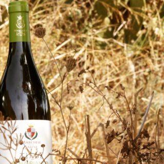 Quando 𝑢𝑜𝑚𝑖𝑛𝑖 e 𝑚𝑜𝑛𝑡𝑎𝑔𝑛𝑒 si incontrano grandi cose accadono... . 𝐸𝑡𝑛𝑎 𝐵𝑖𝑎𝑛𝑐𝑜 𝑇𝑖𝑎𝑑𝑒 𝑏𝑖𝑜, elegante e deciso il 𝐶𝑎𝑟𝑟𝑖𝑐𝑎𝑛𝑡𝑒 in purezza esprime tutta la nobiltà del suo 𝑡𝑒𝑟𝑟𝑜𝑖𝑟🌋 . . 🍷Vini 🌊 mari 🌋 vulcani _______________________________ www.marchesedellesaline.com . Ph. @nadia_b_world . #tiade #photooftheday #nature #volcano #carricante #italy #wine #vino #winelover #winery #winelovers #instawine #vinho #vin #sicilia #winestagram #winecountry #wein #winelife #winegeek #winemaker #naturalwine #vinoitaliano #etnawine #italianwines #summer #catania #etna #etnabianco